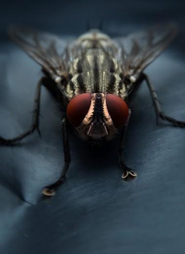 Искусственный интеллект мухи овладел функцией распознавания мух