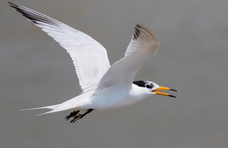 Орнитологи пять лет прожили на необитаемом острове, чтобы спасти морских птиц