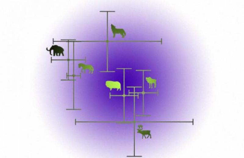 Смена рациона питания позволила серым волкам пережить ледниковый период