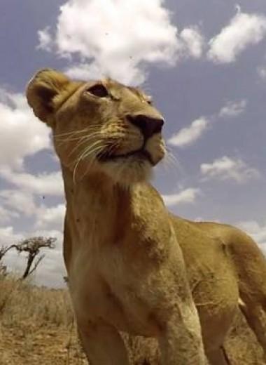 Покормить льва: сервис виртуальной реальности, который понижает стресс
