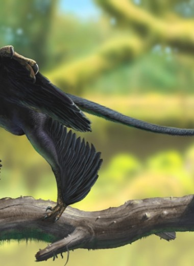 Динозавр о четырёх крыльях