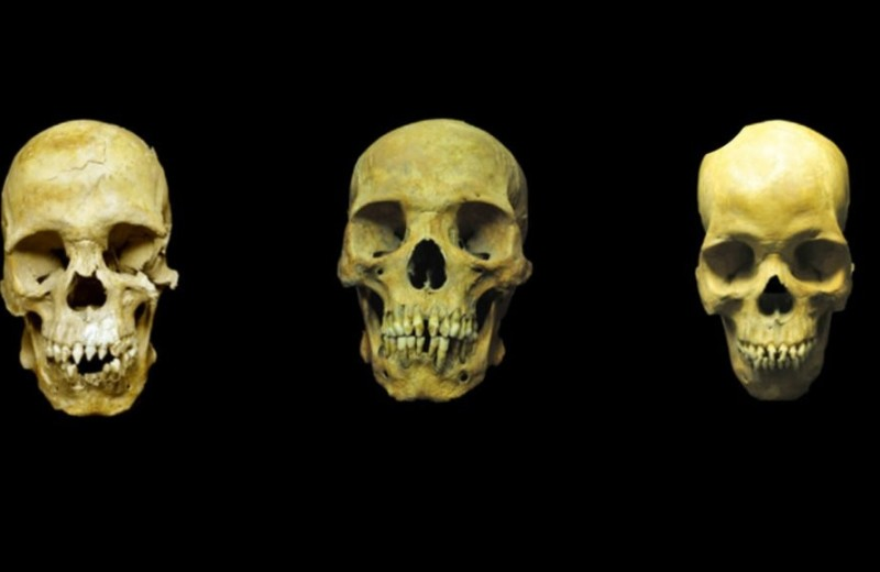 Работорговля принесла в Мексику новые заболевания: о чем рассказали черепа