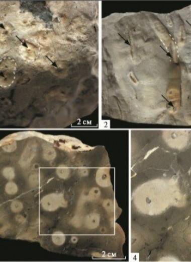 В Красноярском крае нашли следы организмов возрастом 540 миллионов лет