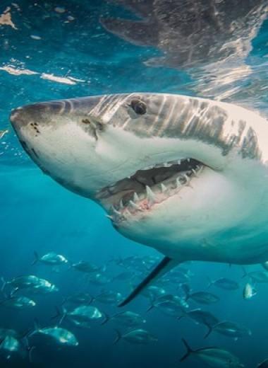 Никаких резких движений и выброси фонарик: чего точно не надо делать, чтобы тебя не съела акула (бонус — инфографика!)