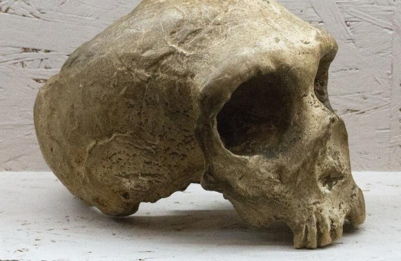 Неандертальцев из Васко-Кантабрии сгубила низкая мобильность