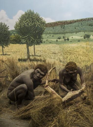 Люди могли научиться разводить огонь 1600000 лет назад