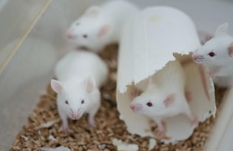 Найдена мутация, вызывающая обсессивно-компульсивный синдром
