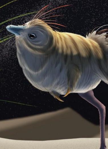 Ночные хищники: некоторые динозавры могли охотиться в темноте