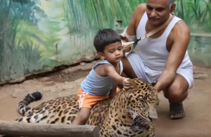 40 лет со зверями в одном дворе: как один человек спас тысячи животных