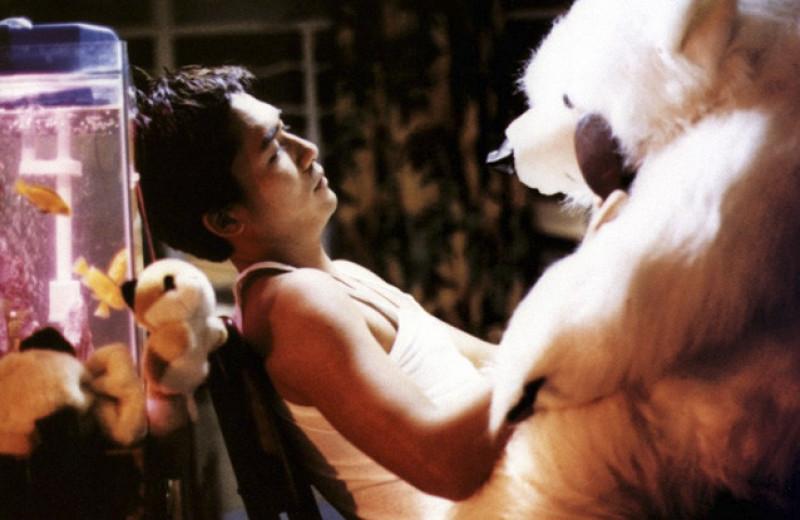 Любовь, кино, Вонг Карвай. Исповедь Гордея Петрика