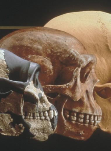 Чем объяснить изменения лица в процессе эволюции? Новое исследование