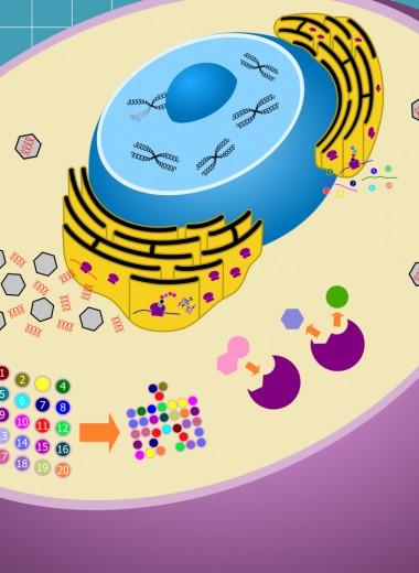 Как вирусы взламывают наши клетки