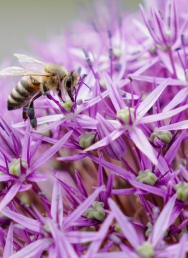 Как один сайт может предотвратить смерть миллионов российских пчел