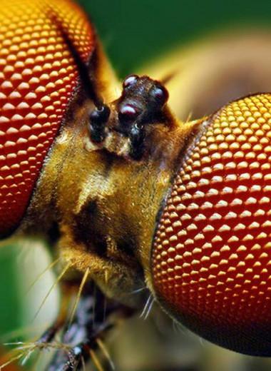 Ученые воспроизвели покрытие, защищающее от бликов глаза насекомых