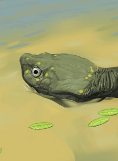 Палеонтологи описали древнейшую бокошейную черепаху из Северной Америки