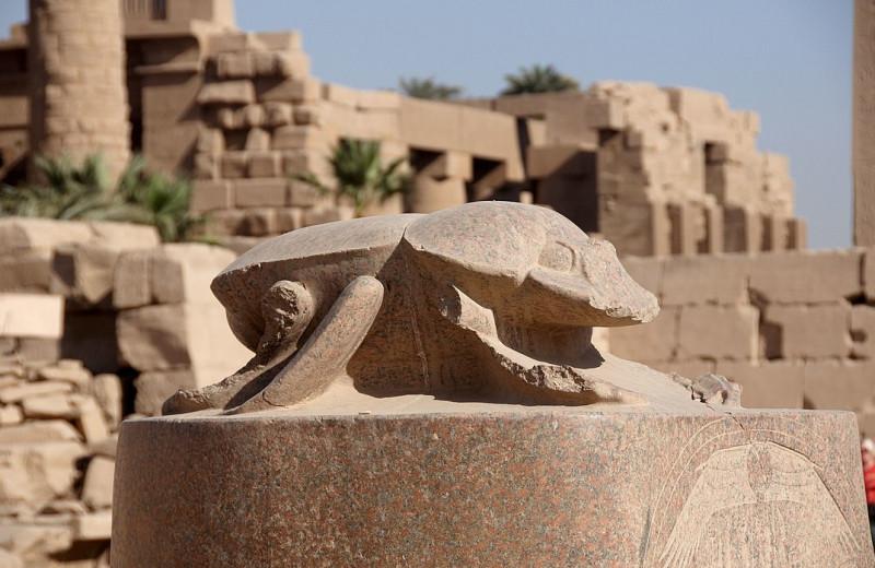 Усы, лапы, хвост: 7 удивительных памятников животным