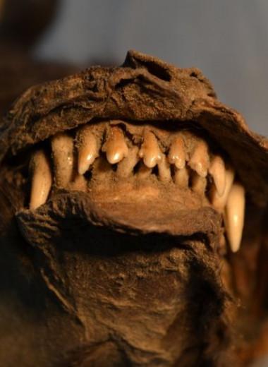 Древний щенок 14 000 лет назад успел поужинать одним из последних шерстистых носорогов