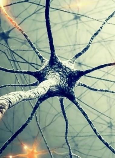 Робот-лаборант поможет ученым выращивать нейроны