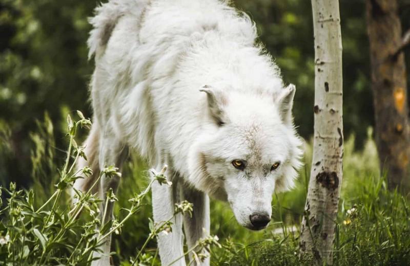«Породы нон грата». Эксперты-кинологи о списке потенциально опасных собак