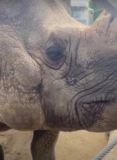 Носорог сыграл на синтезаторе в свой день рождения: видео