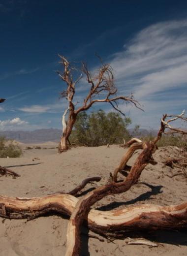 Быстрый рост деревьев отрицательно сказался на продолжительности их жизни