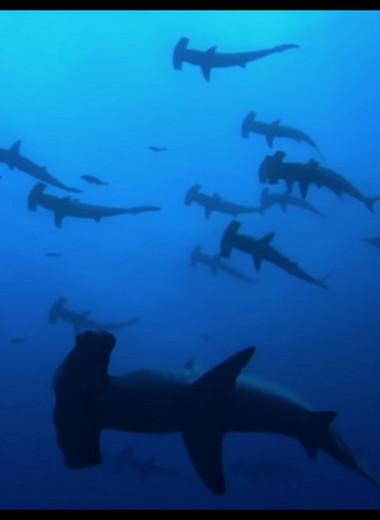 Страшные, пугающие и даже мотивирующие фильмы про акул: список лучших зубастых картин