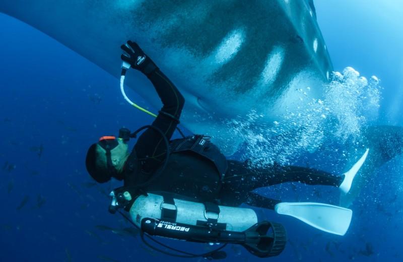 Китовым акулам сделали УЗИ: видео