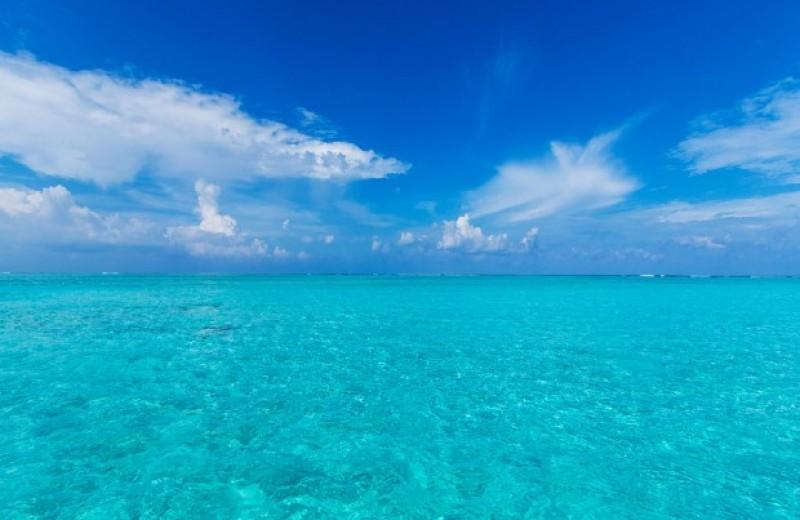 Потепление воды заставило морских обитателей повысить широту
