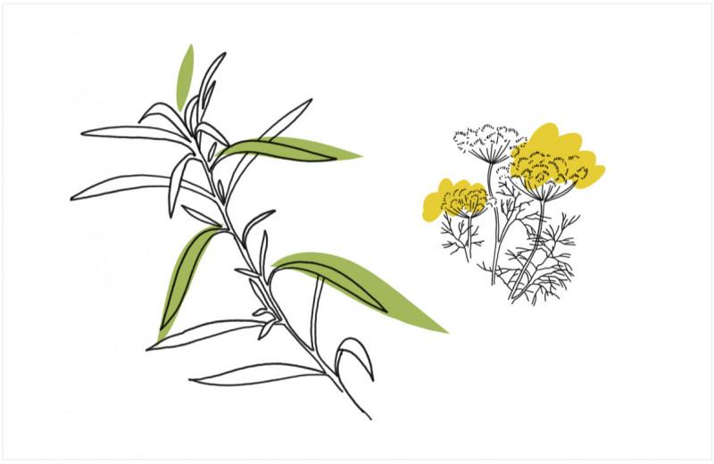 От лука до розмарина: 10 полезных и вкусных трав