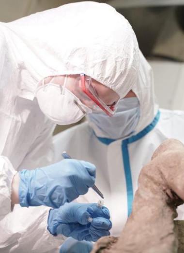 Российские ученые ищут древние вирусы в окаменелостях животных, найденных в вечной мерзлоте