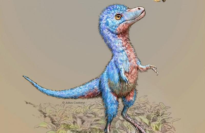 Найдены редчайшие останки малышей-тираннозавров