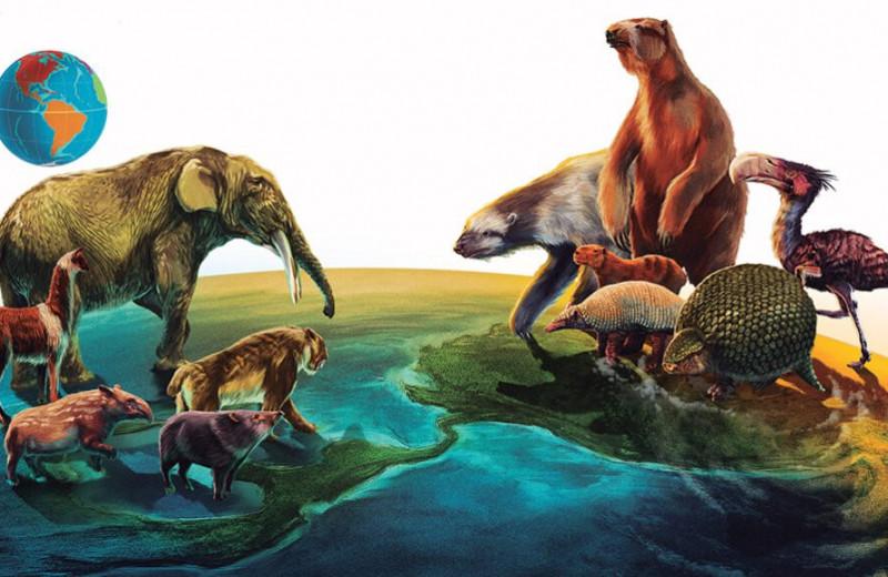 Почему древние млекопитающие Южной Америки проиграли северным собратьям