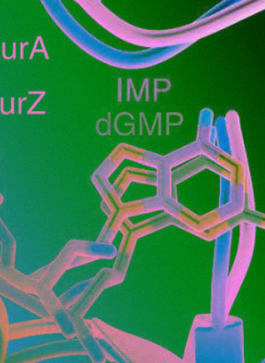 Геномы бактериальных вирусов с альтернативными нуклеотидами оказались не такими редкими