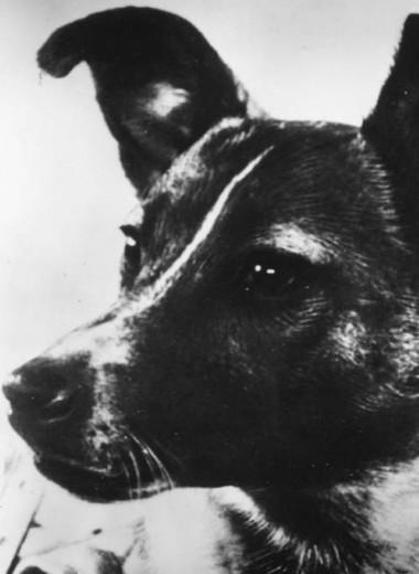 История Лайки: единственная собака, отправленная в космос погибать