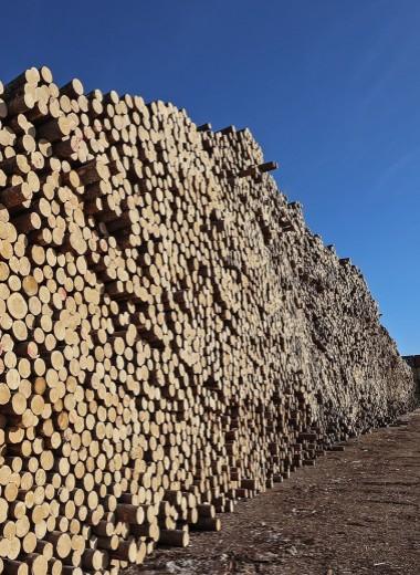 Россия пригрозила запретить экспорт древесины в Китай из-за «черных вырубок»