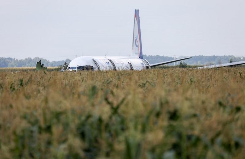Намного чаще, чем в Европе: авиакомпании рассказали о столкновениях самолетов с птицами в России
