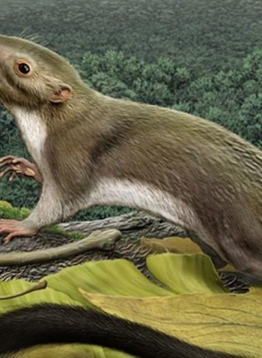 Ученые выяснили, чем питались предки человека, жившие одновременно с динозаврами