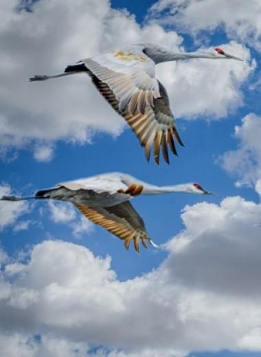 Как устроена навигация у птиц и лососей
