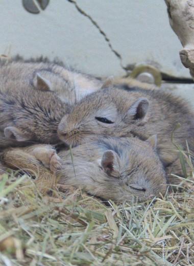 В мозге мышей и крыс обнаружили точку, активирующую режим гибернации