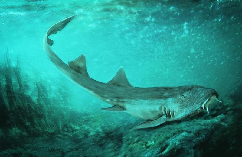 Открыт новый вид доисторических акул