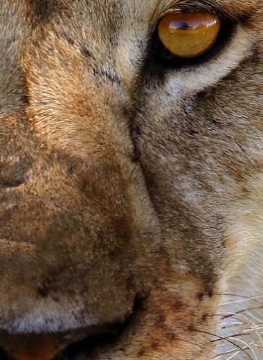 Акуна Матата: впечатляющая дикая природа на фотографиях Федора Глухих