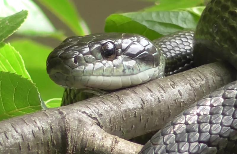 Радиоактивные змеи помогают ученым оценить последствия аварии на Фукусиме