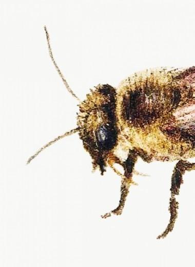 Зачем пчелы объединяются