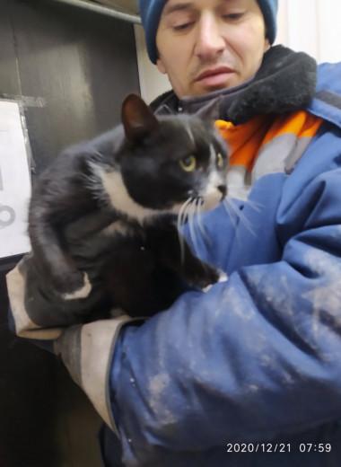 Кот в мешке: на мусоросортировочном комплексе в пакете нашли домашнего питомца