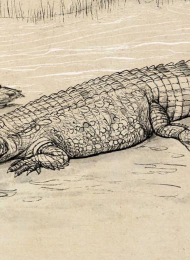 В Австралии нашли крупнейшего в истории континента крокодила