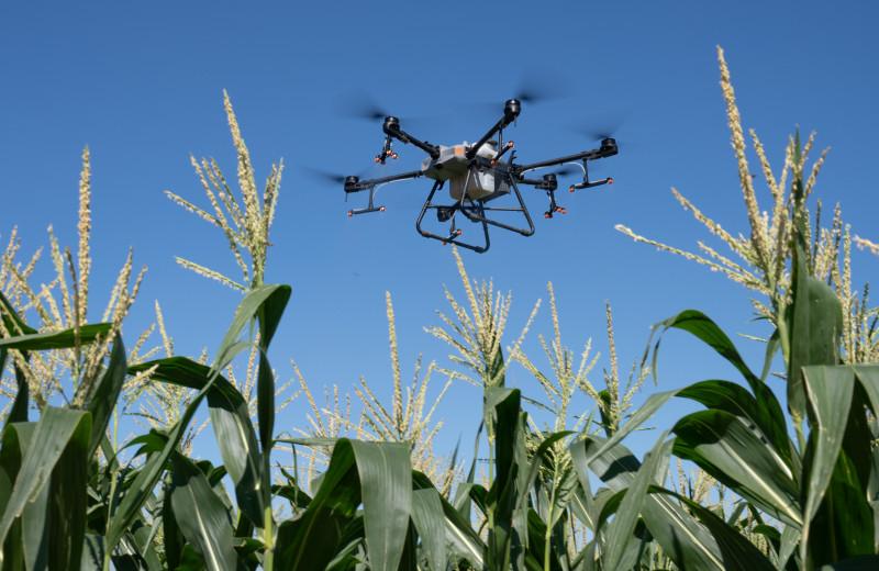 Есть ли польза от дронов в сельском хозяйстве