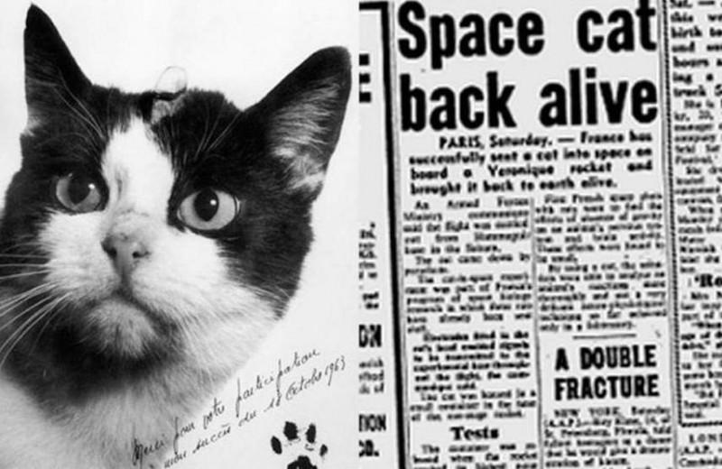 История первой и единственной кошки в космосе