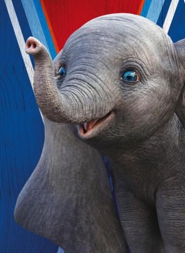 Слоны и машины: как работает современный цирк