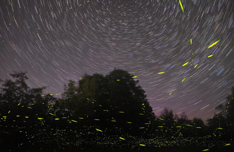 Светляков заподозрили в отпугивании летучих мышей с помощью ультразвука