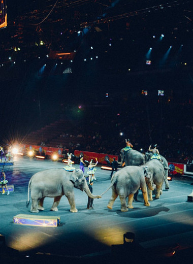 Животные в цирках: развлечение или издевательство